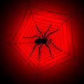Паяк с паяжина