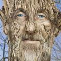 Дървото - човек