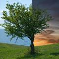 Как да сменим лесно фона зад дърво